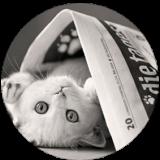circlecat